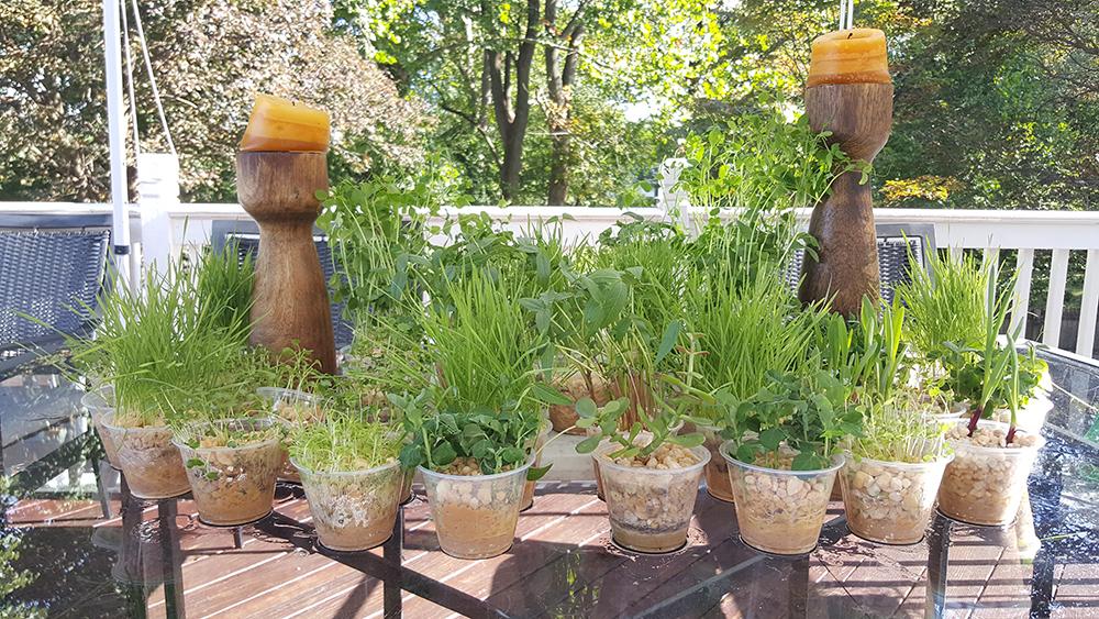 Table Gardening