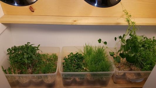 Closet Gardening