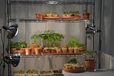 Basement Farming
